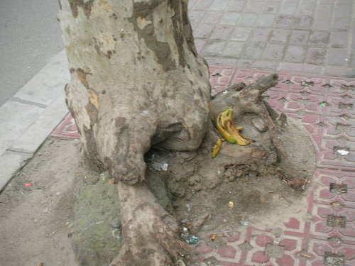 街路樹の根元に